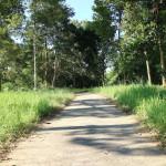 ベトナムの自然保護区「カッティエン国立公園」