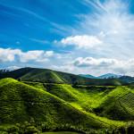 最近のマレーシアの農業事情について(2016年1月時点)